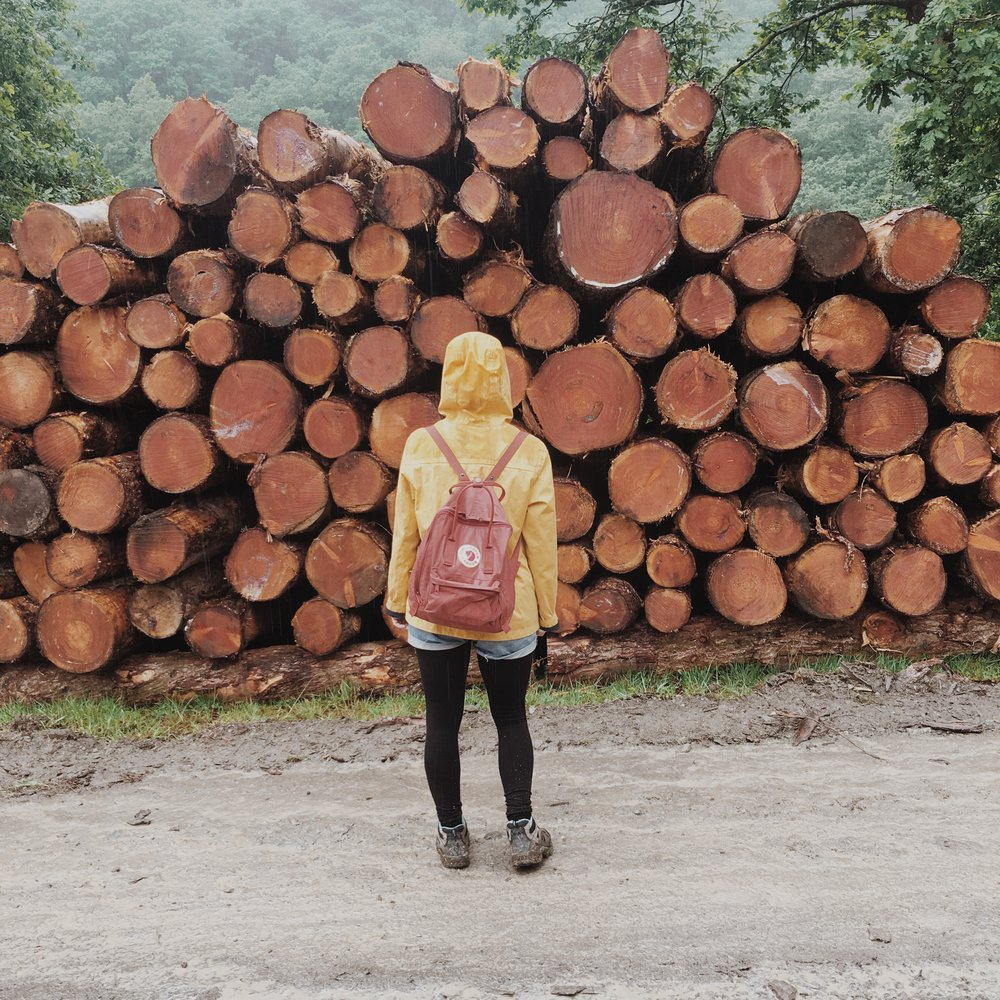 The Forestry Comission are using the forest for sustainable lumbar supplies.