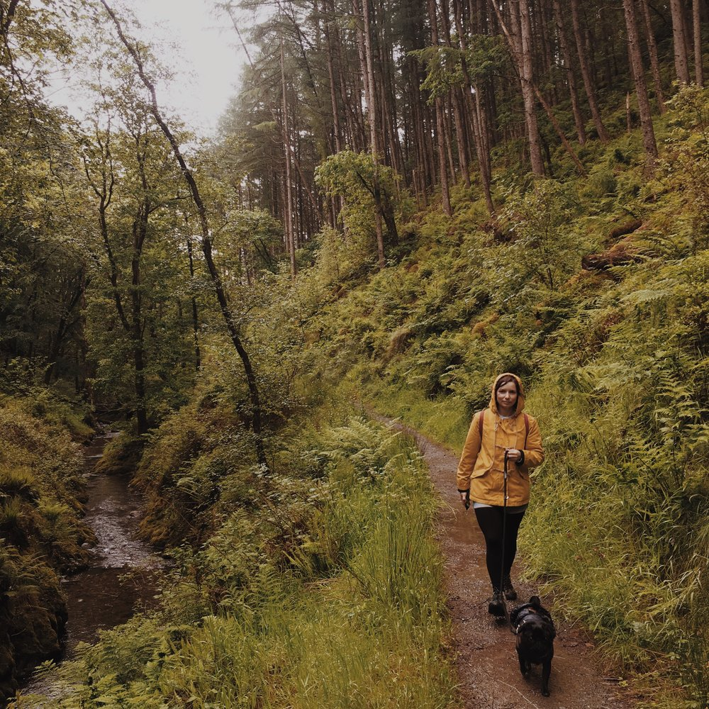 The trails are very dog friendly and due to the lack of farmland you can have your dog off the lead throughout the forest.