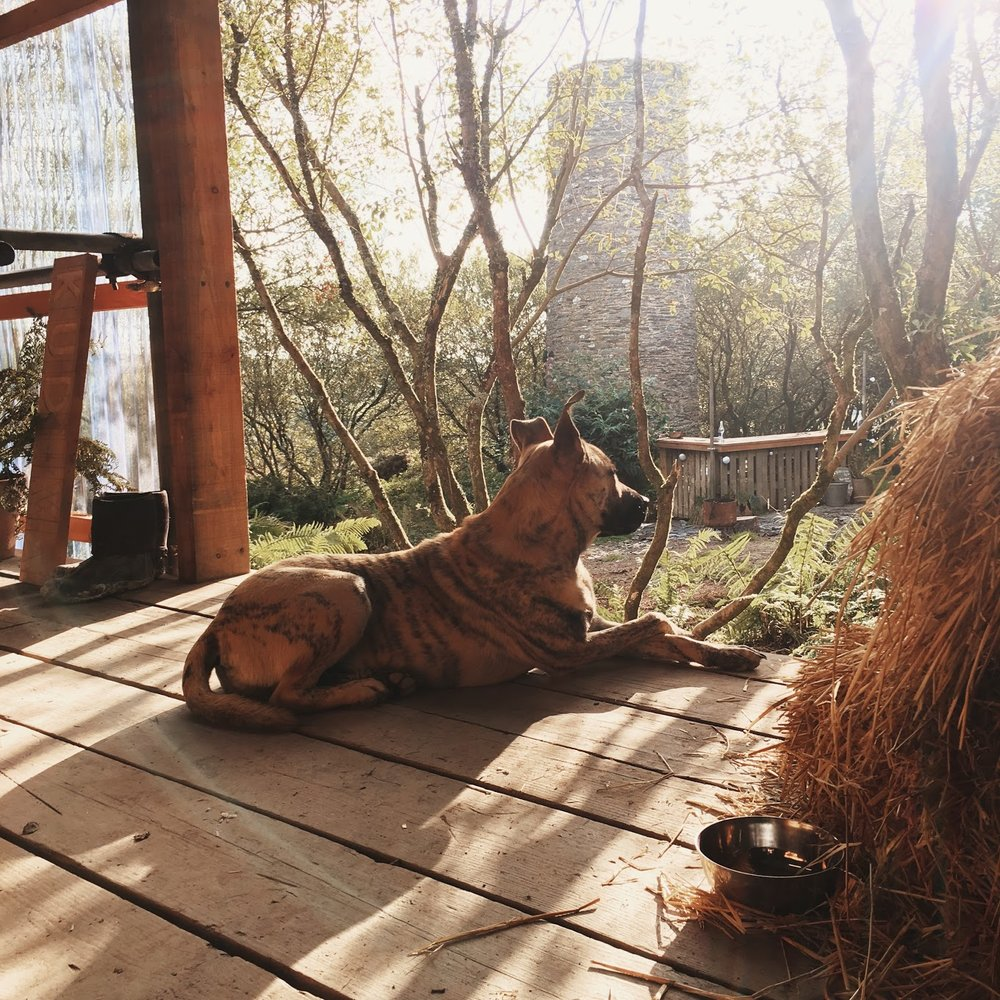Winter in his favourite spot