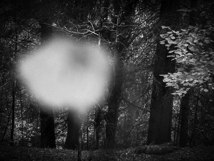 ©Ellen Semb Hagen_In the Woods.jpg