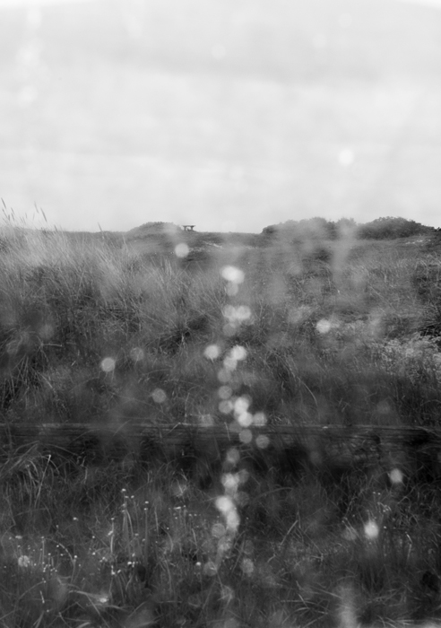 ©Ellen Semb Hagen_The Path.jpg