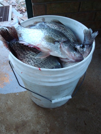 bucket of fish.JPG