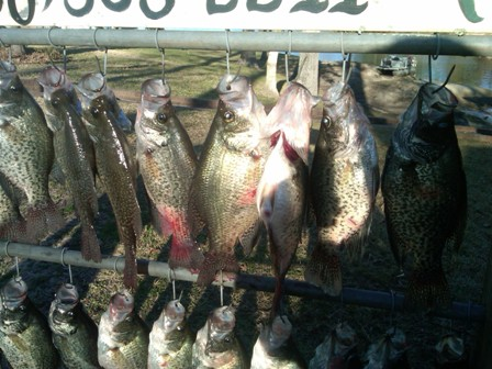 close up crappie.jpg