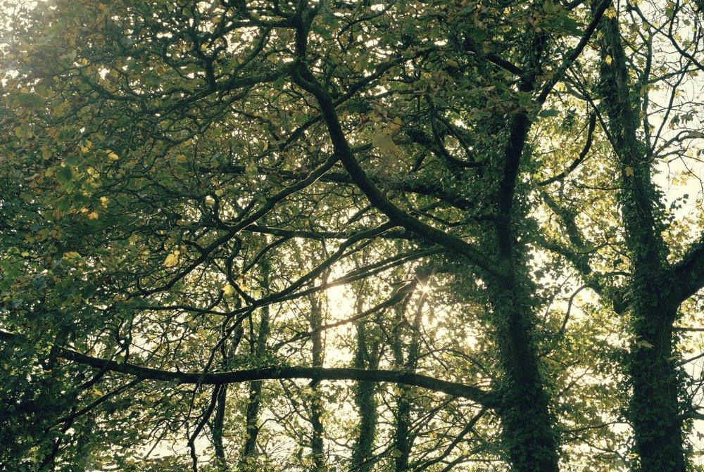 sun_trees.jpg
