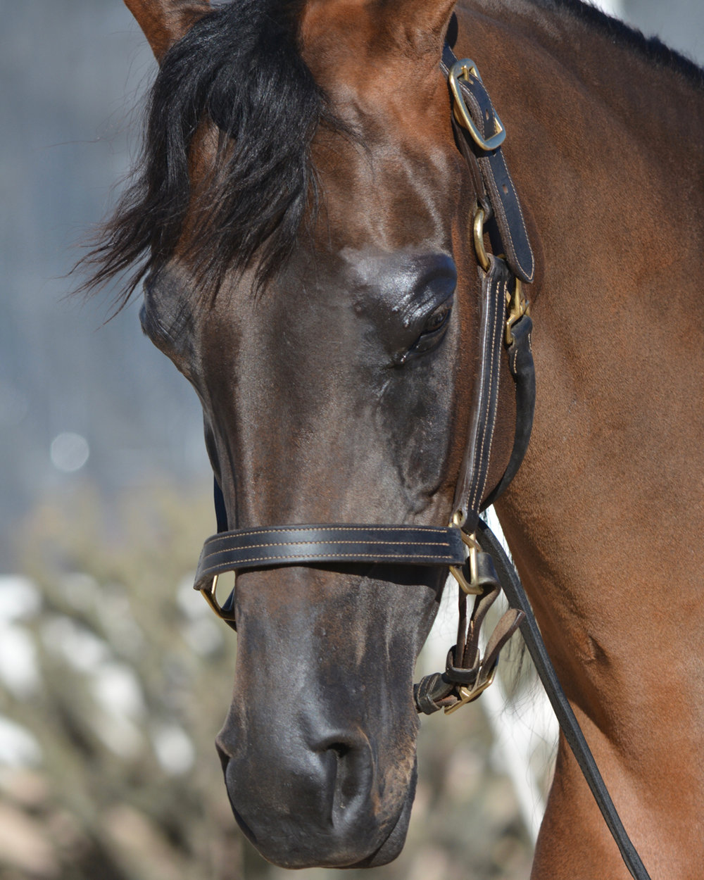 Expo_Arabianhorse.jpg