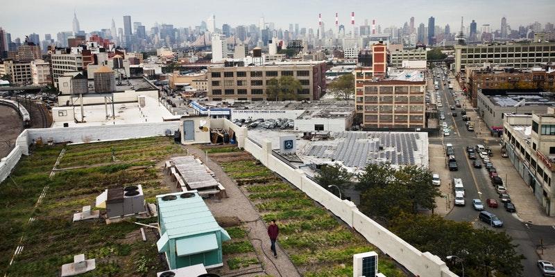 YaleNYC_Foodtober_RooftopFarmTour_10.21.17.jpg