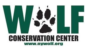 wolf conservation center 2.jpg