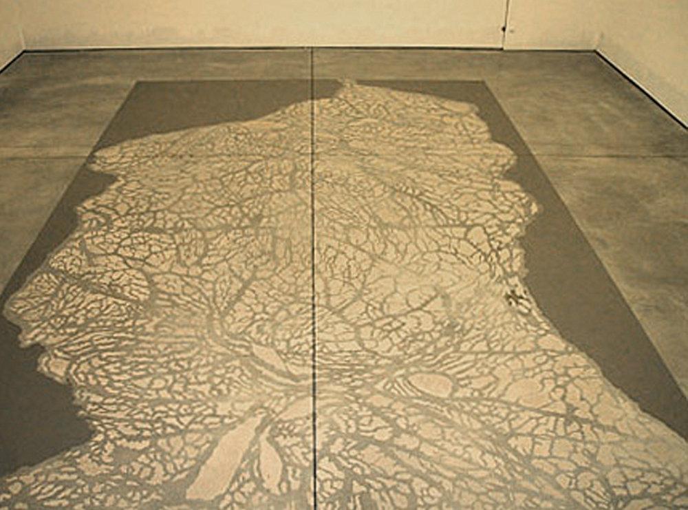 Membrana, Sean Kelly Gallery