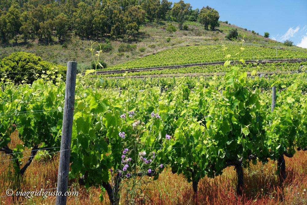 wine-14.jpg
