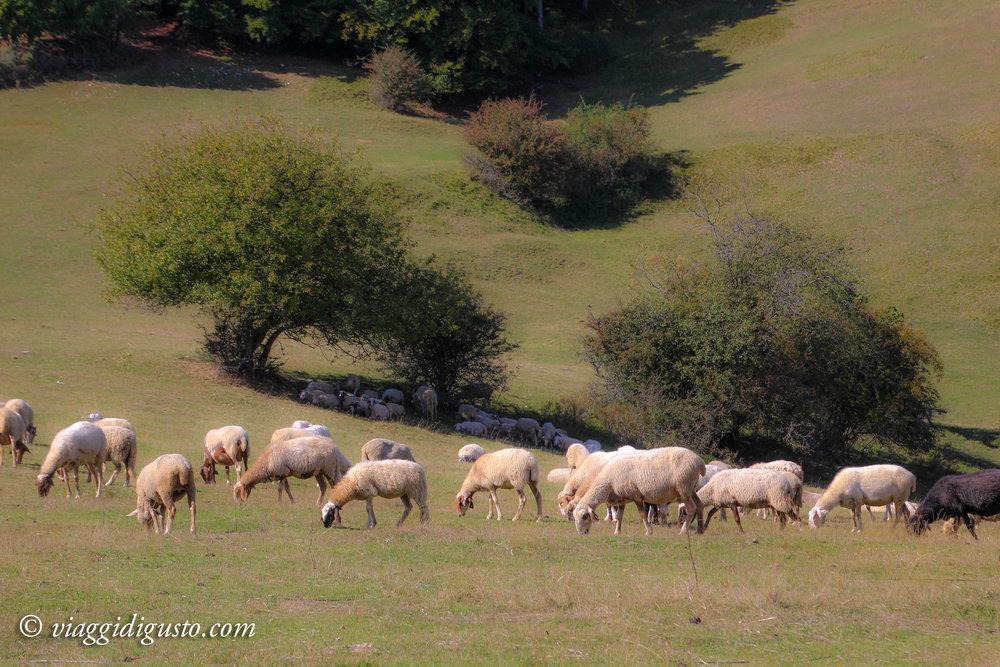 umbria countryside.jpg