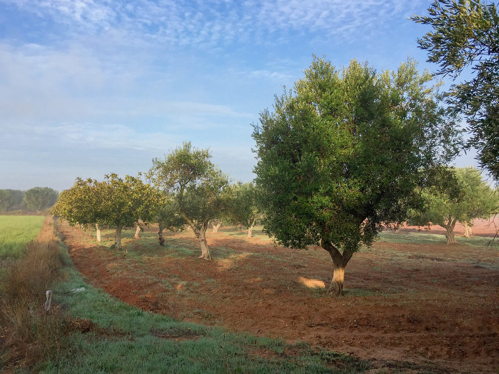 puglia countryside-2.jpg