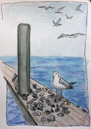 gull sketch.jpg