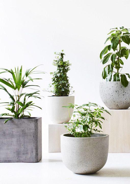 desk plants 1.jpg