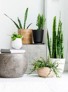 desk plants 2.jpg