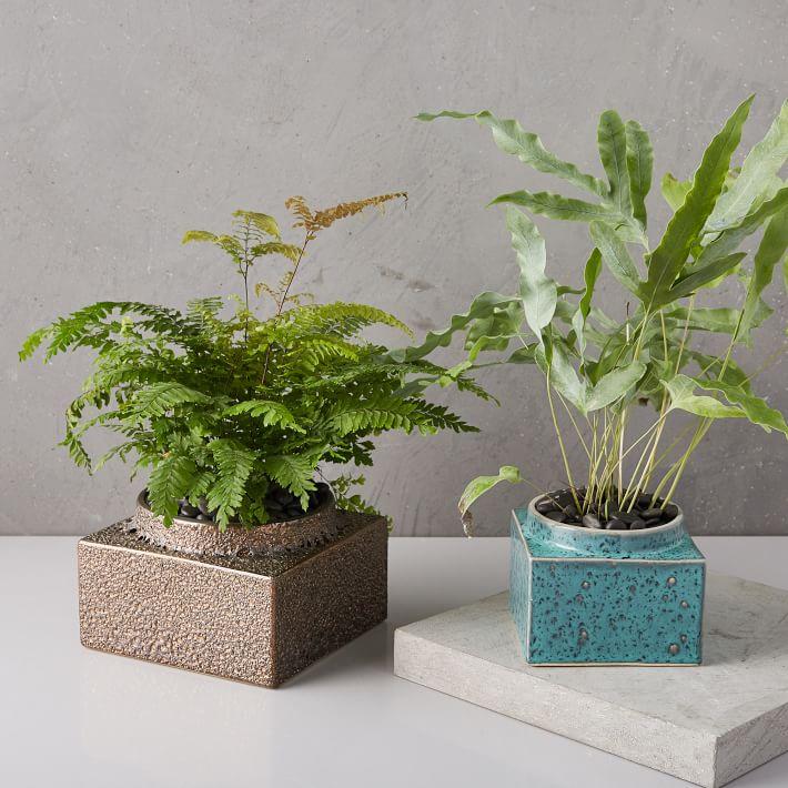 WestElm-lava-glaze-planters-o.jpg