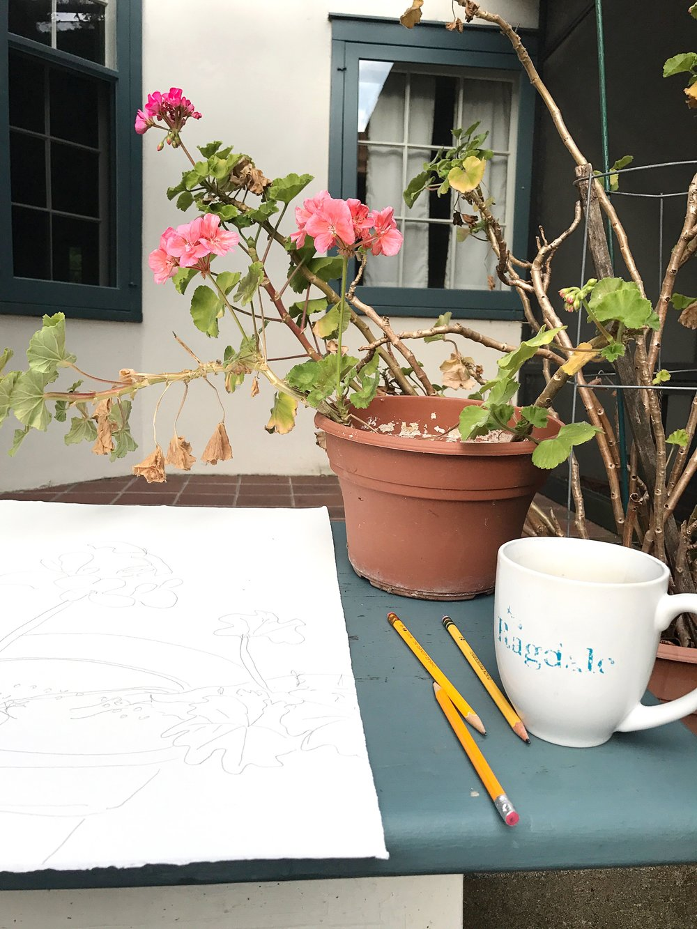 Sketching one of the many, many geraniums at the main house.