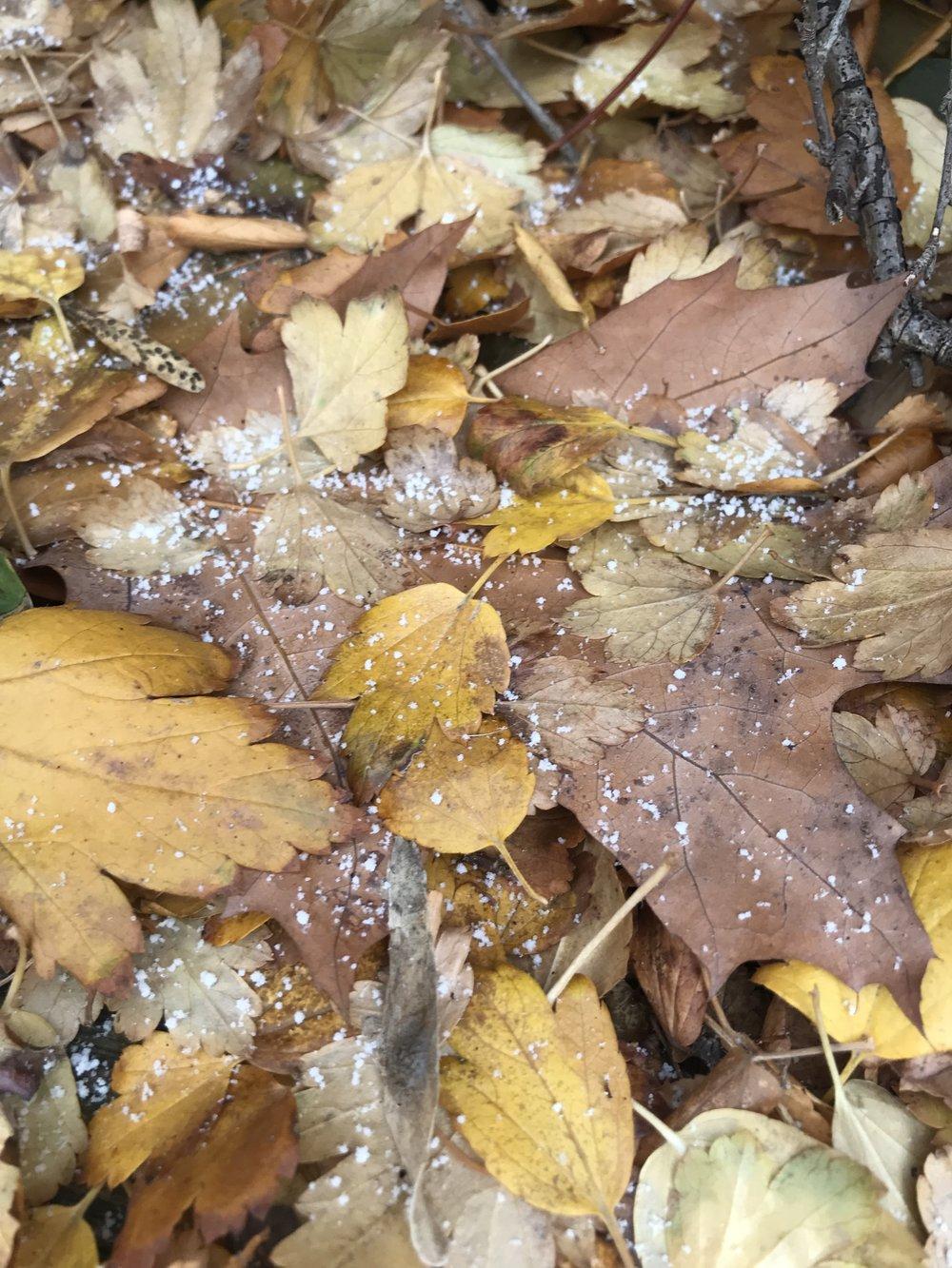 kate lewis art.brown leaves photo.jpg
