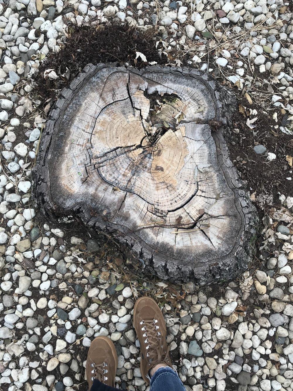 kate lewis art.tree stump photo.jpg