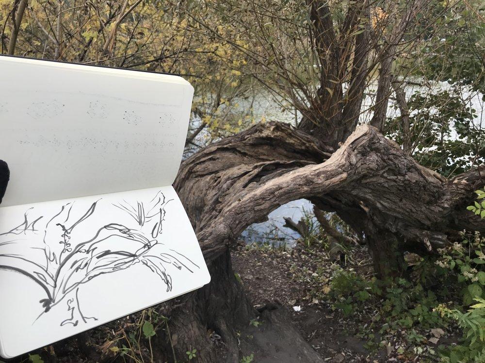 kate lewis art.tree sketch and photo.jpg
