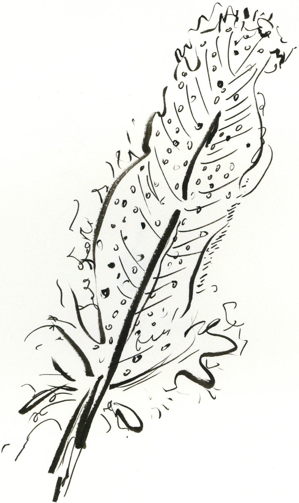 kate lewis art.feather sketch.JPG