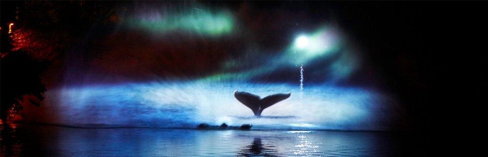 Whale3-1200x386.jpg