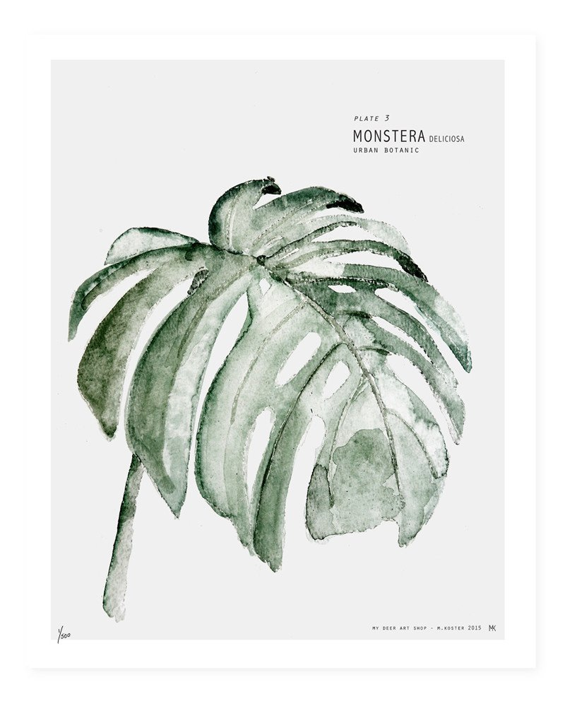 """<span style=""""font-family:Helvetica;letter-spacing:2px;font-size:10px;color:rgba(28,28,28,0.8);text-transform:uppercase;""""><b>MONSTERA BOTANICAL [MY DEER]</b></span>"""