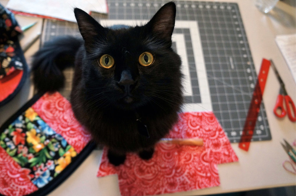 """Halfway through me shooting this tutorial Bagheera decides it is time for me to take a """"let's play with the cat"""" break!!"""