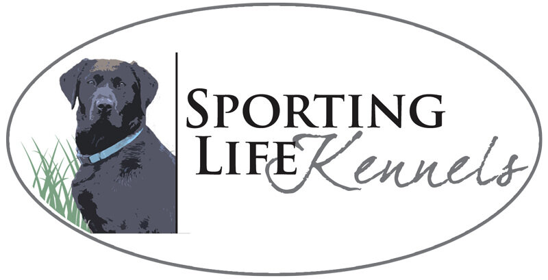 British Labrador Puppies — Sporting Life Kennels