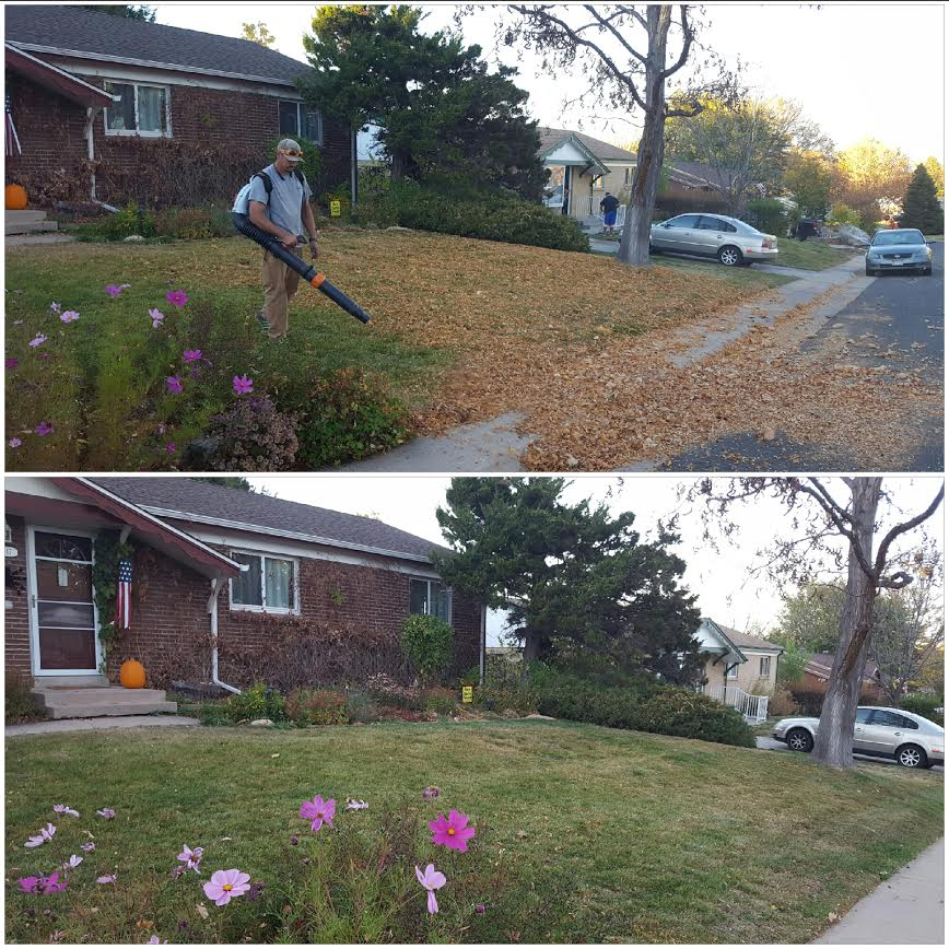 Leaf clean up 2.jpg