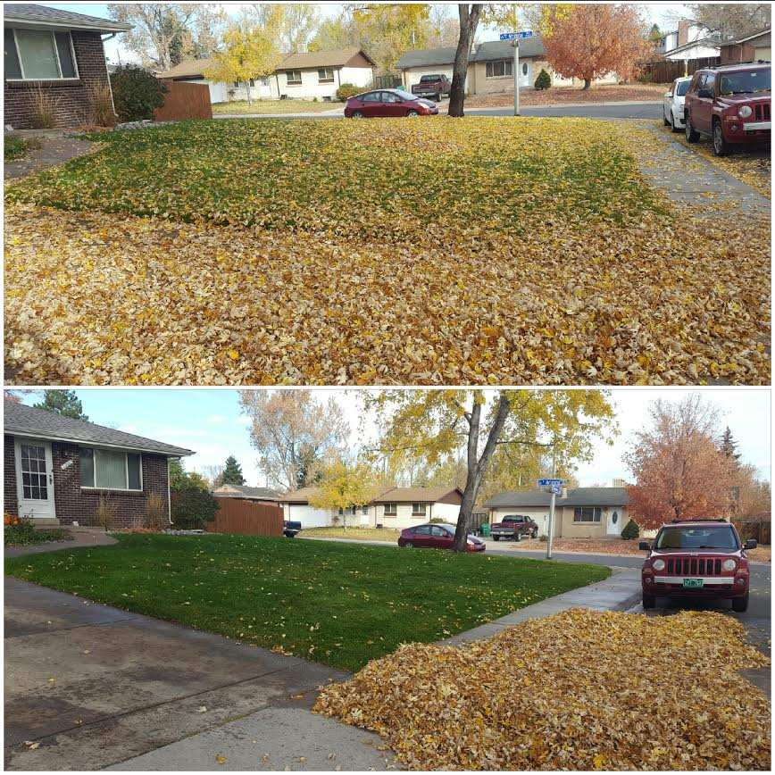 Leaf clean up.jpg