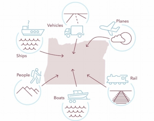 THERE ARE MANY DIFFERENT PATHWAYS AND VECTORS FOR INTRODUCTION AND MOVEMENT, INCLUDING HUMAN ACTIVITY, TRANSPORT, AND VARYING ENVIRONMENTAL SYSTEMS. Illustration by Studio Clear