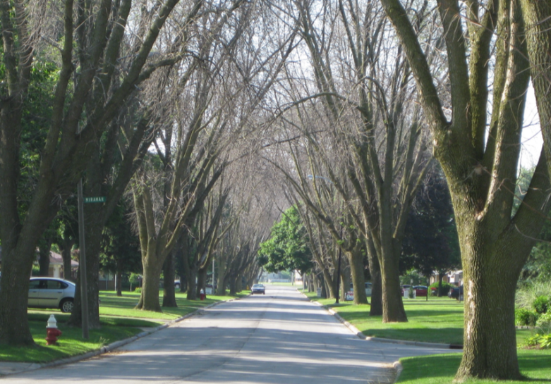 Toledo, OHio in 2009 -- After Emerald Ash borer. Photo by Dan Hermes