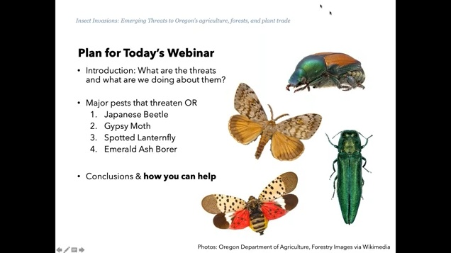 1st slide of Emerging Pest webinar outlining the agenda.
