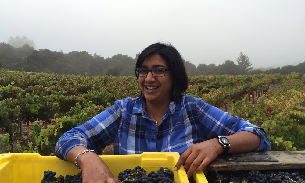 Shalini Sekhar - Shalini is our winemaker. We met Shalini at ROAR Winery in San Francisco and were thrilled when she agreed in the spring of 2016 to spearhead Neely Wine as it enters a new decade of and superb vinification. Her experience is manifold and impressive: after attending the post-baccalaureate enology program at Fresno State, she worked at Stags Leap Wine Cellars and then Williams Selyem, where she honed her Pinot Noir winemaking skills. She became cellar master at Copain Custom Crush (now Punchdown Cellars) and also worked at Bluxome Street Winery. She joined the team at ROAR as the Custom Crush Winemaker, making wines for Furthermore Pinot and Waits-Mast Family Cellars, among others. In 2015 she was named Winemaker of the Year at the San Francisco International Wine Competition for her work with Furthermore. She continues to make wine for Waits-Mast in San Francisco. Visit ottavinowines.com.