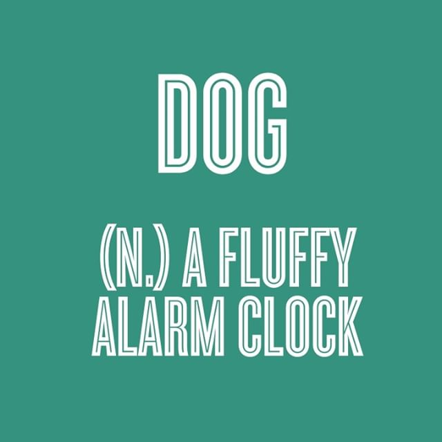 ...And I wouldn't have it any other way. ⏰🐶❤️ • • • • • #petsloveplay #petstagram #dogsofinstagram #catsofinstagram #petsaustralia #dogsofaustralia #ecofriendly #greengoals #greenplanet #readytoplay #plushtoys #mustlovedogs #dogtoys #designerbeds #designerpets #petlife #dogowner #petowner #pets #australia #dogs #cats #pawesome #dogsofmelbourne #dogsofsydney #dogsofperth #dogsofbrisbane