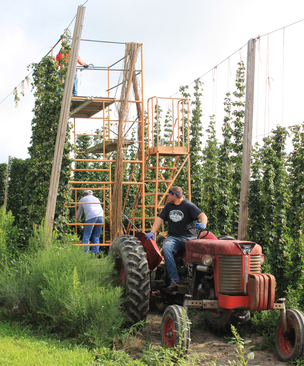 Steve Howe and his crew harvesting hops at Howe Farms