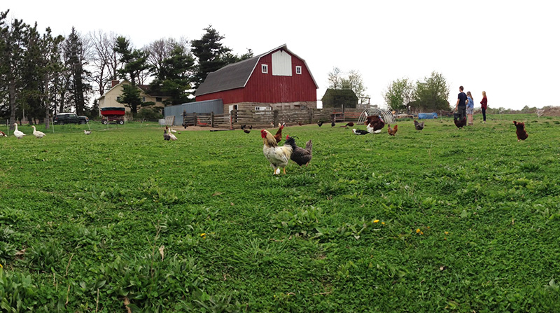 Acorn Acres Farm