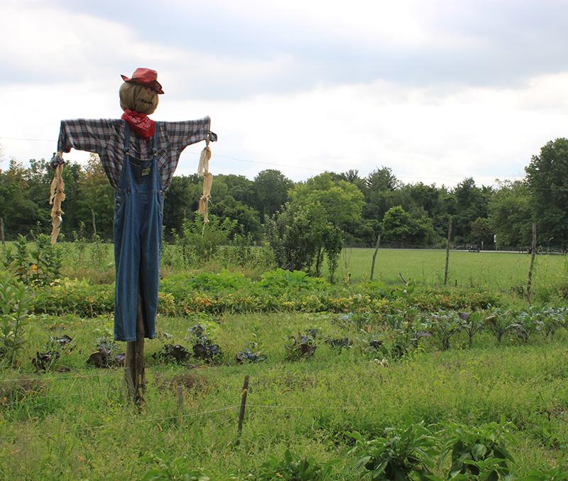 chelberg-farm-01.jpg