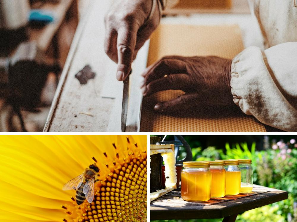 Beekeeping header.png