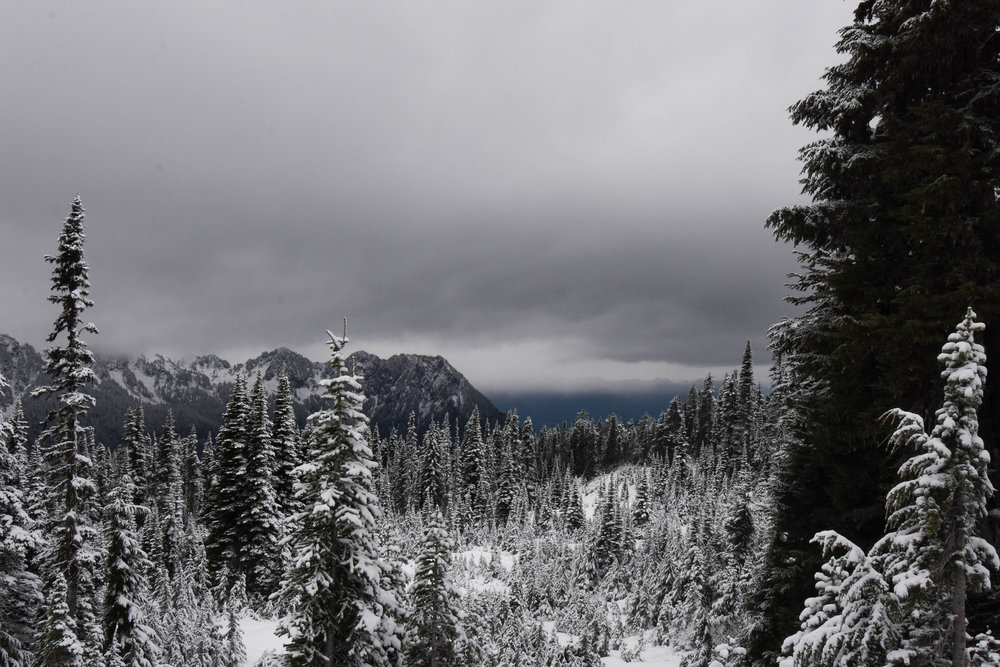 Near Rainier's peak, oppressive cloud cover imbued the landscape with an unshakable moodiness.