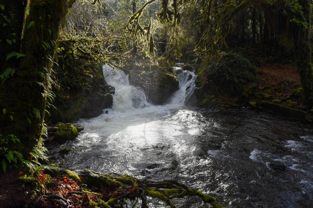 In Olympic National Park's Quinault Rain Forest, sunbeams penetrated the mist emanating from a creek.