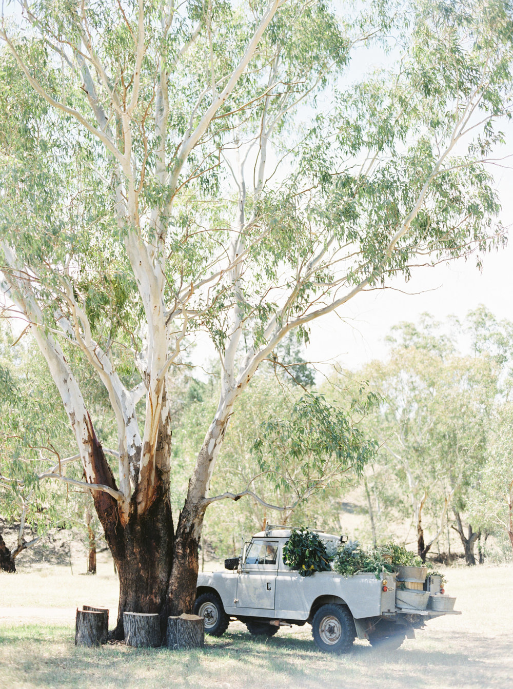 00022- Olive Tree Mediterranean Wedding in Mudgee NSW Australia Fine Art Film Wedding Lifestyle Photographer Sheri McMahon_.jpg