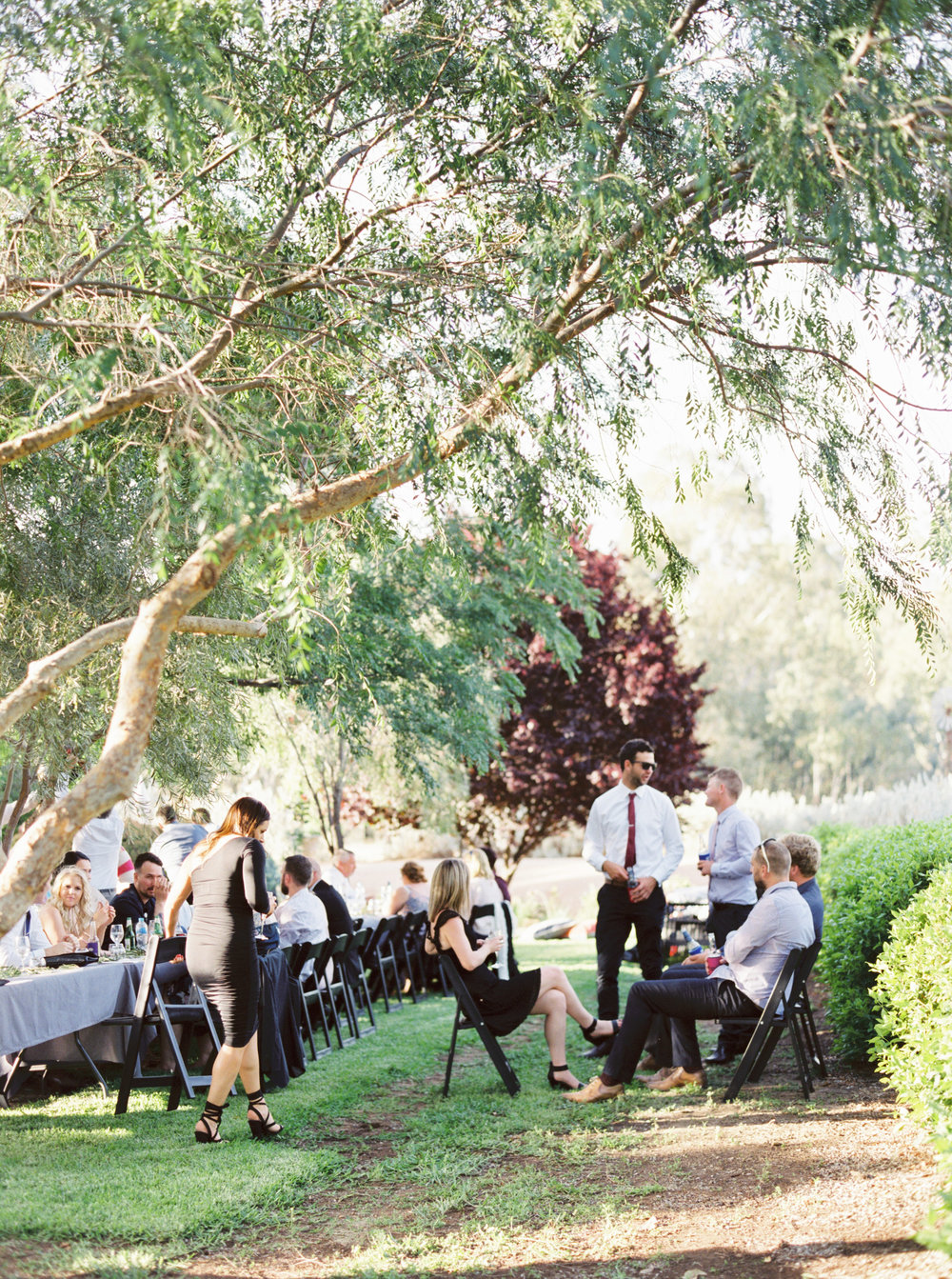 00080- Olive Tree Mediterranean Wedding in Mudgee NSW Australia Fine Art Film Wedding Lifestyle Photographer Sheri McMahon_.jpg