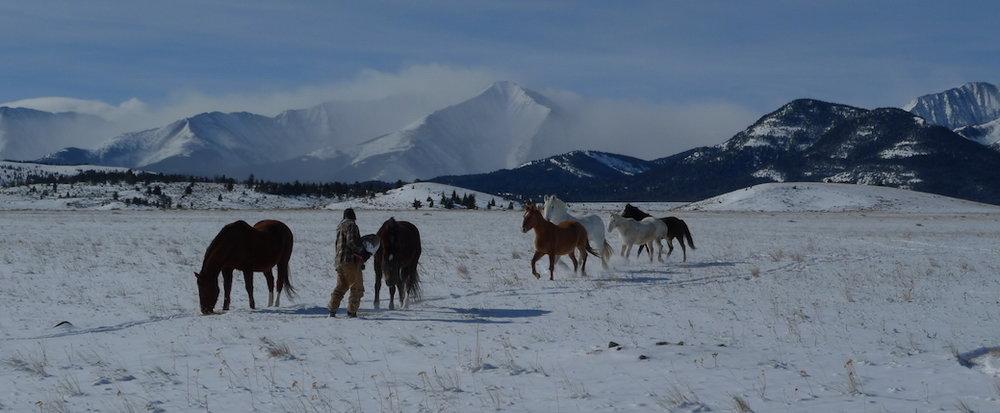 Montana.snow.jpg