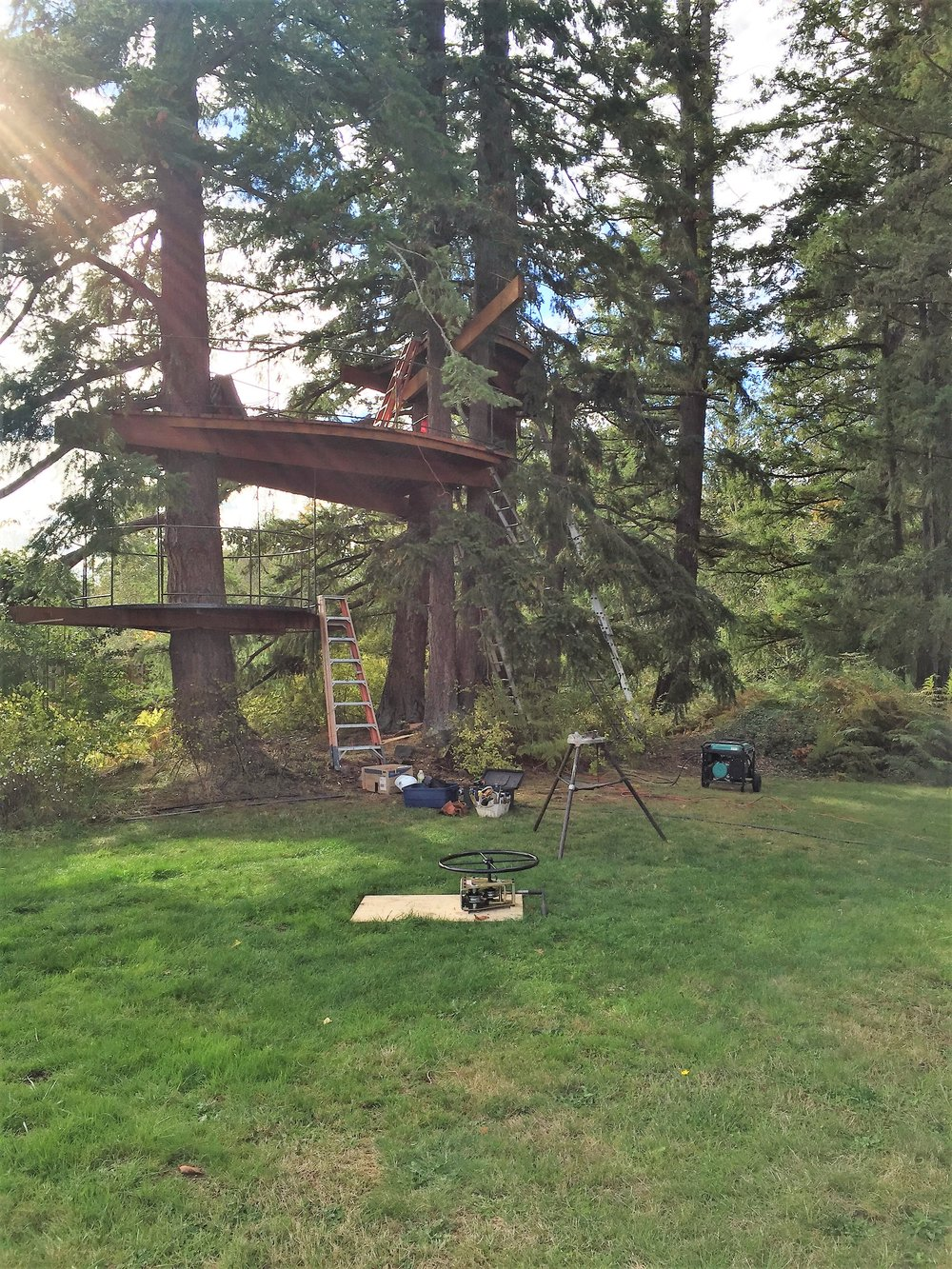 tree fort under construction, from a distance.JPG