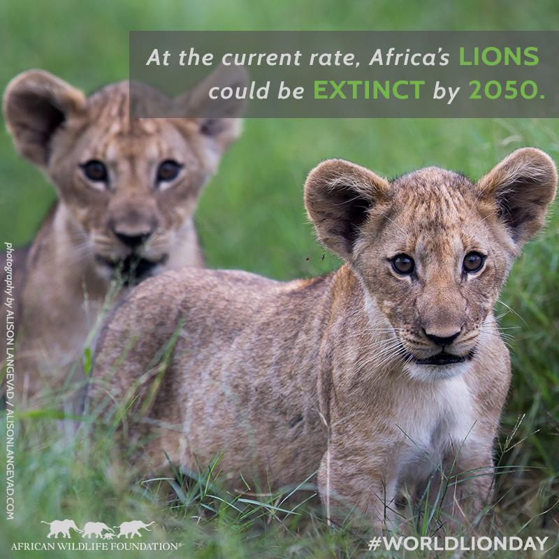 Lions Extinct.png