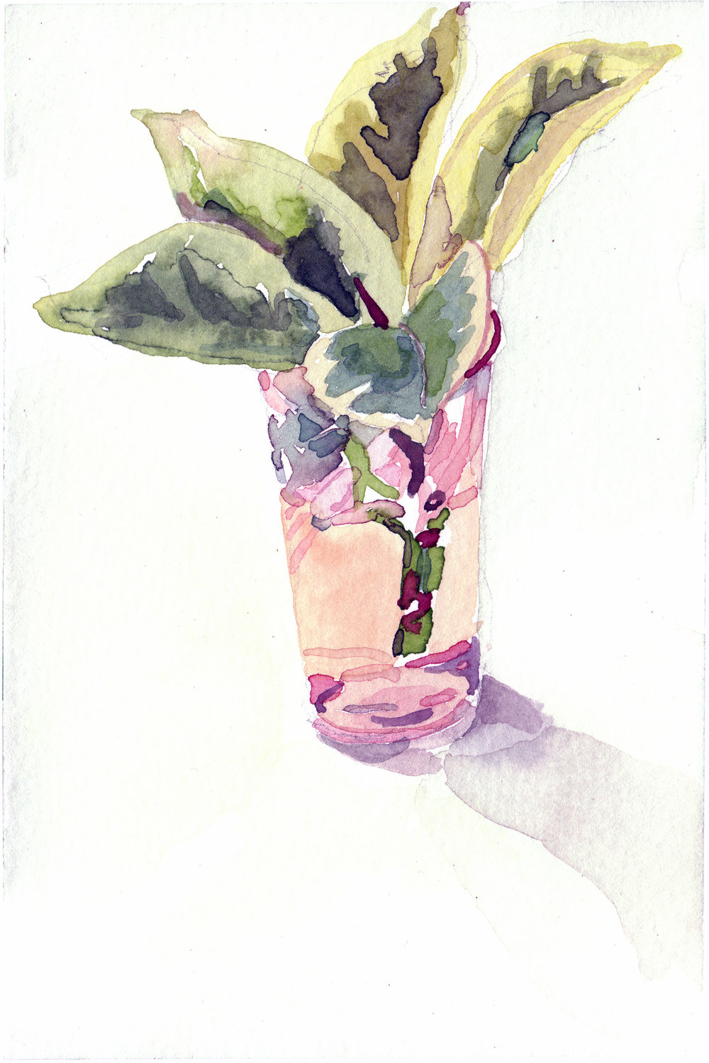 2008. Plant in glass. 4 x 6""
