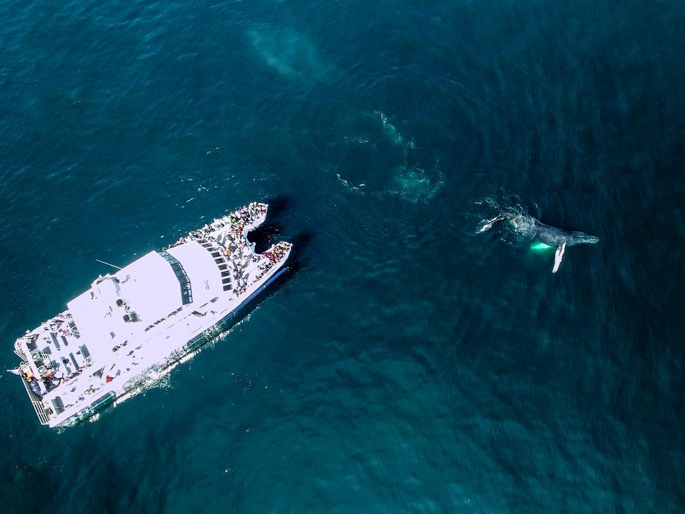 The Whale Photo.JPG