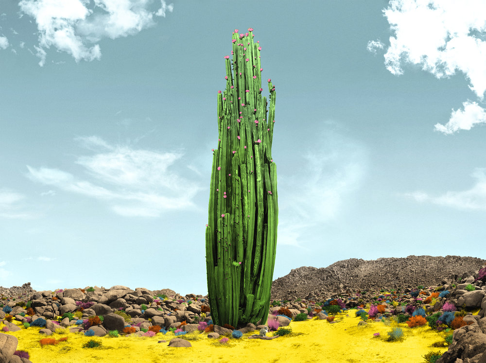 "THE WONDERS. ""Big Ole Cacti."" Available at  Scout & Whistle."