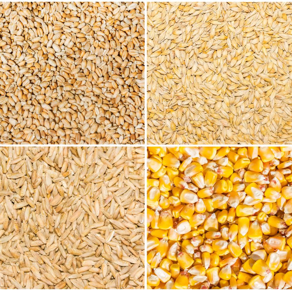 clockwise from upper left: wheat, barley, corn, rye